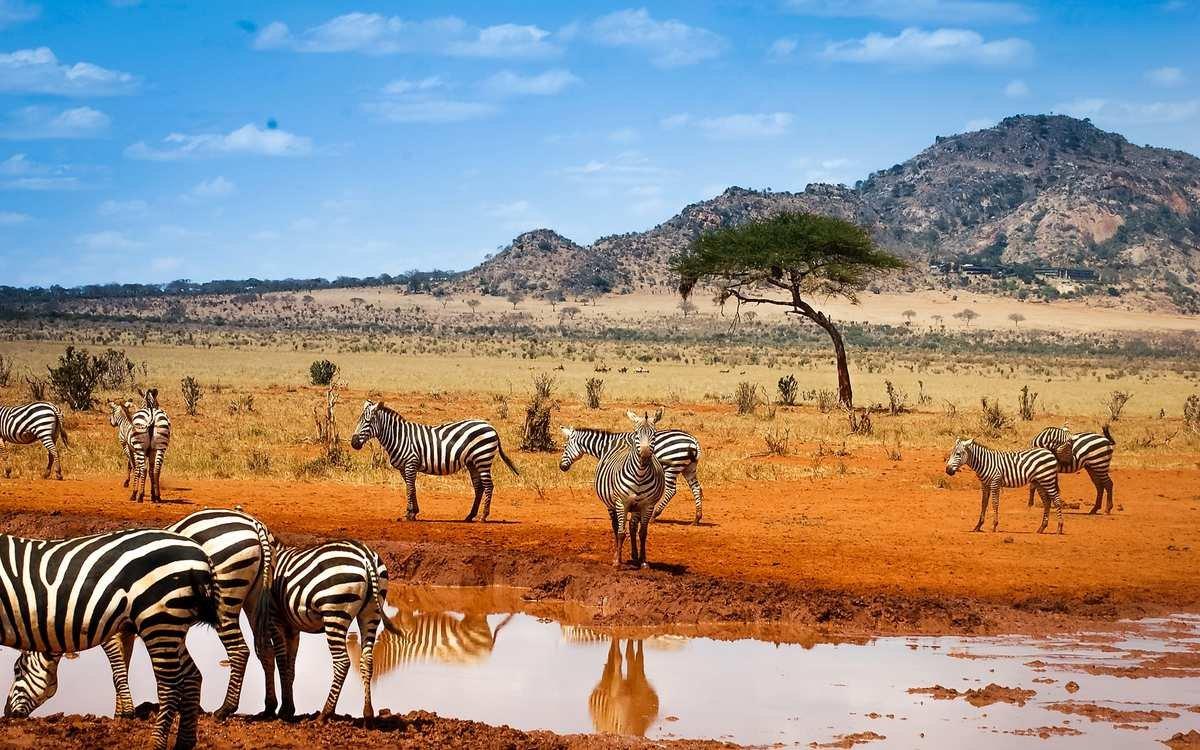 сафарі в Африці, подорож до Африки